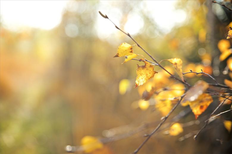 Herbstshooting Freiberg
